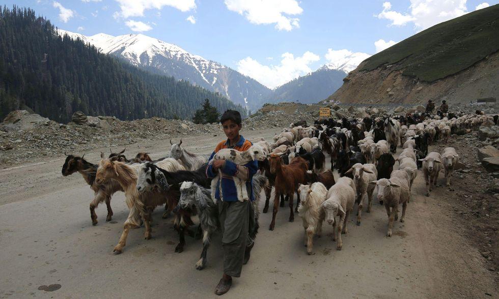 In viaggio con i Bakerwal, pastori nomadi nel Kashmir