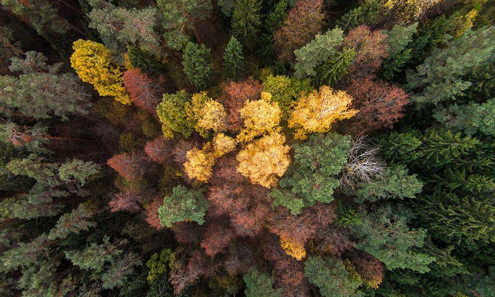 L'autunno in Lituania: foto con drone