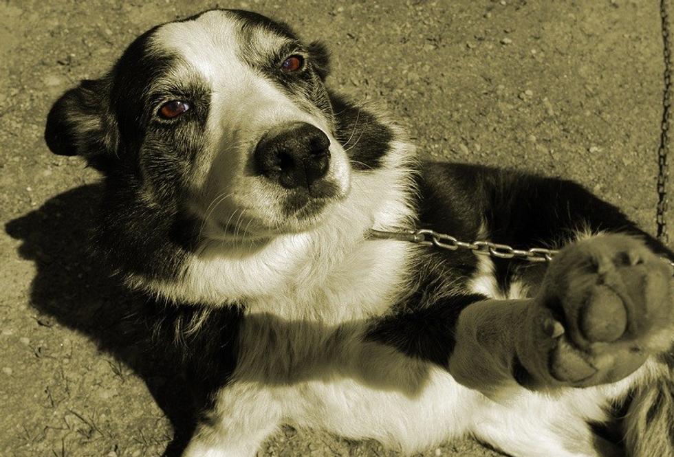 Sesso con gli animali, la Lav denuncia le inserzioni sul web