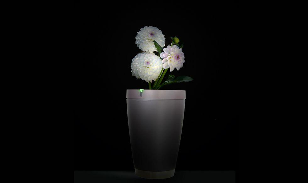 """Parrot Pot, ecco il vaso intelligente che """"parla"""" con i fiori"""