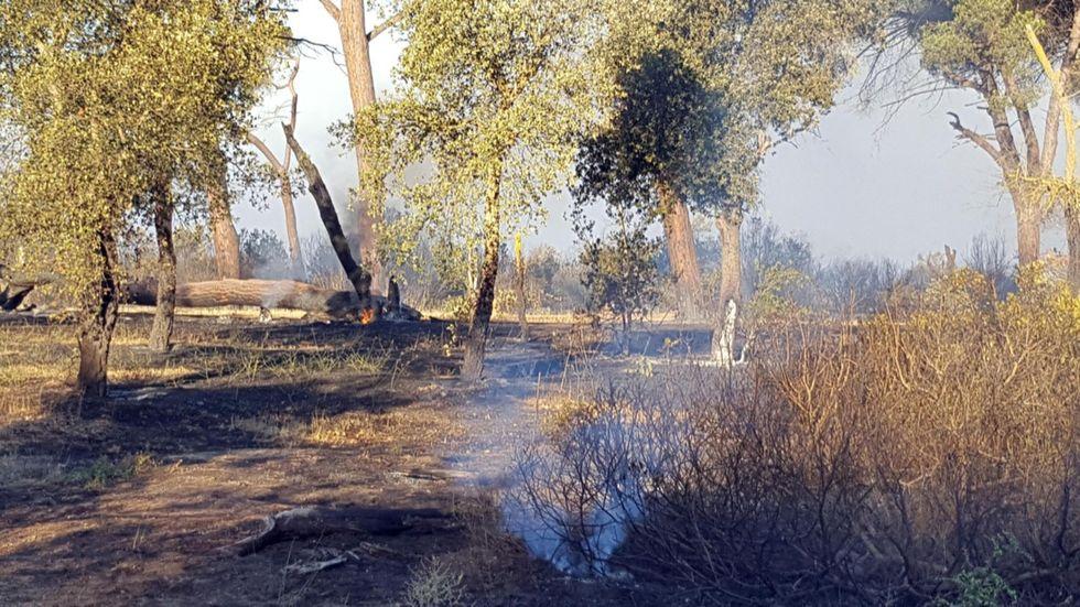 Incendi in Italia: ettari in fumo in Toscana, Lazio e Campania - Foto e video
