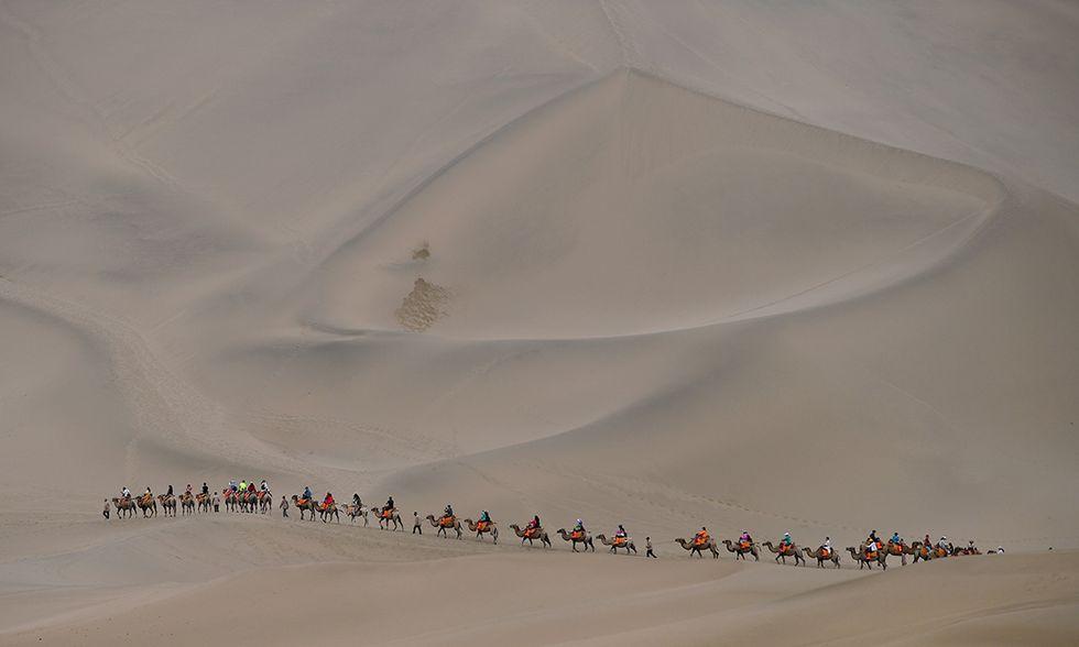 Cammelli nel deserto di Dunhuang