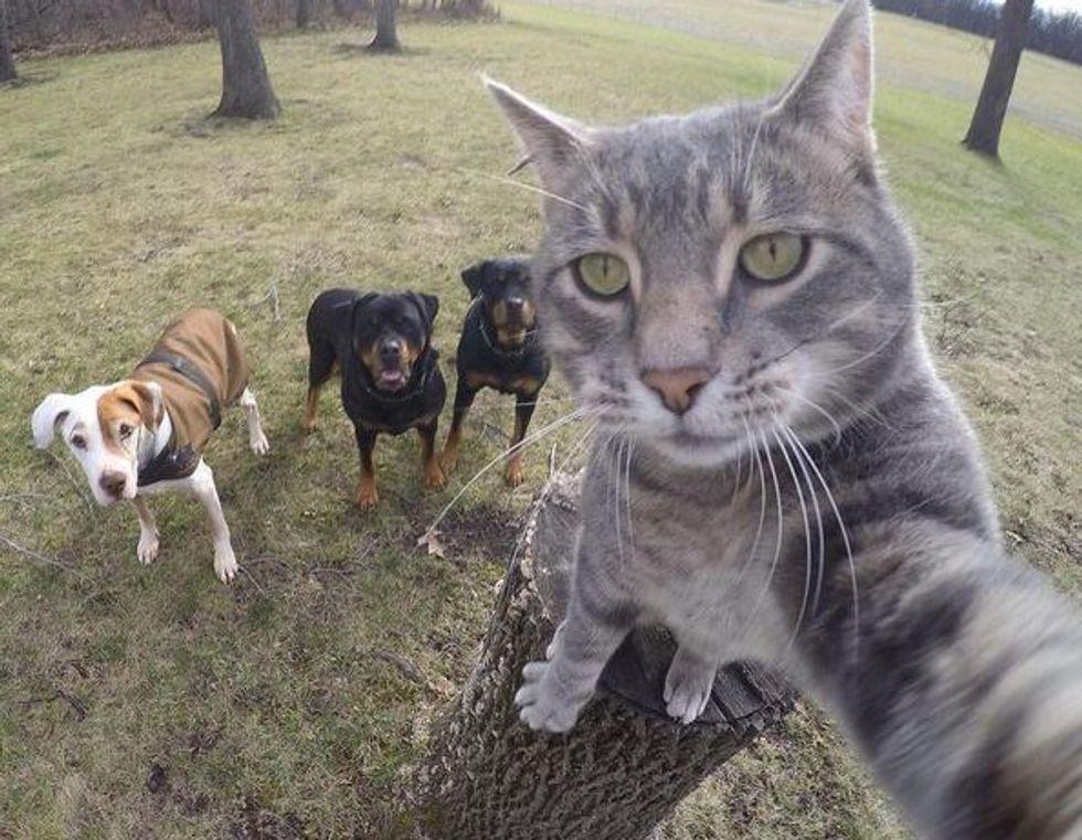 Manny, il gatto che si fa i selfie
