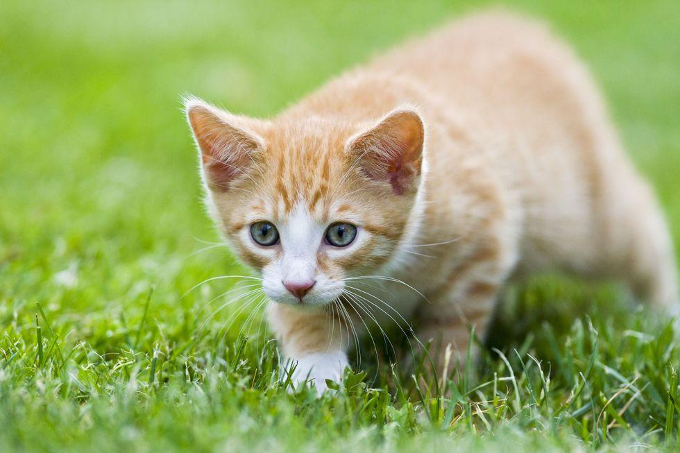 Oggi la Festa del Gatto: 10 cose da sapere