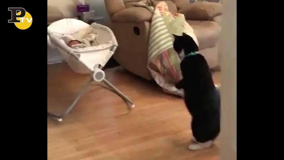Gatto sorpreso dall'arrivo del neonato in casa