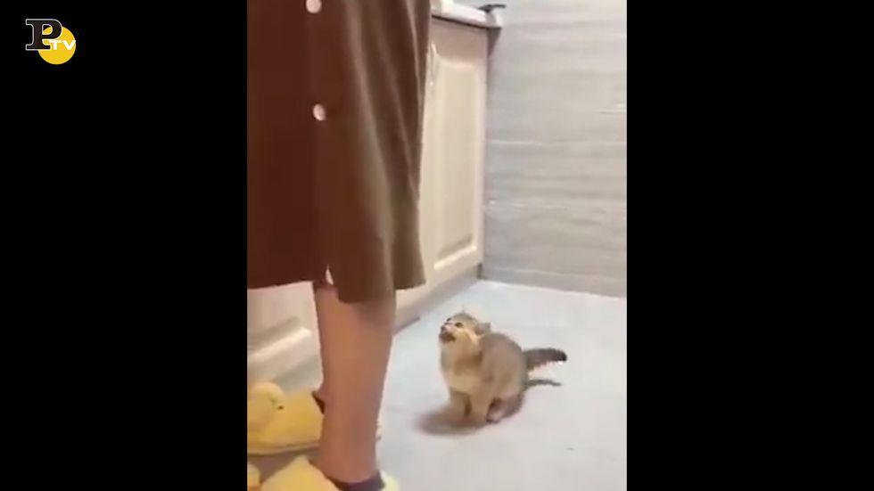 Gattino affamato attira l'attenzione della padrona