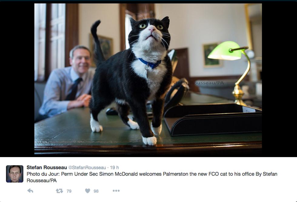 Palmerston, il gatto diplomatico
