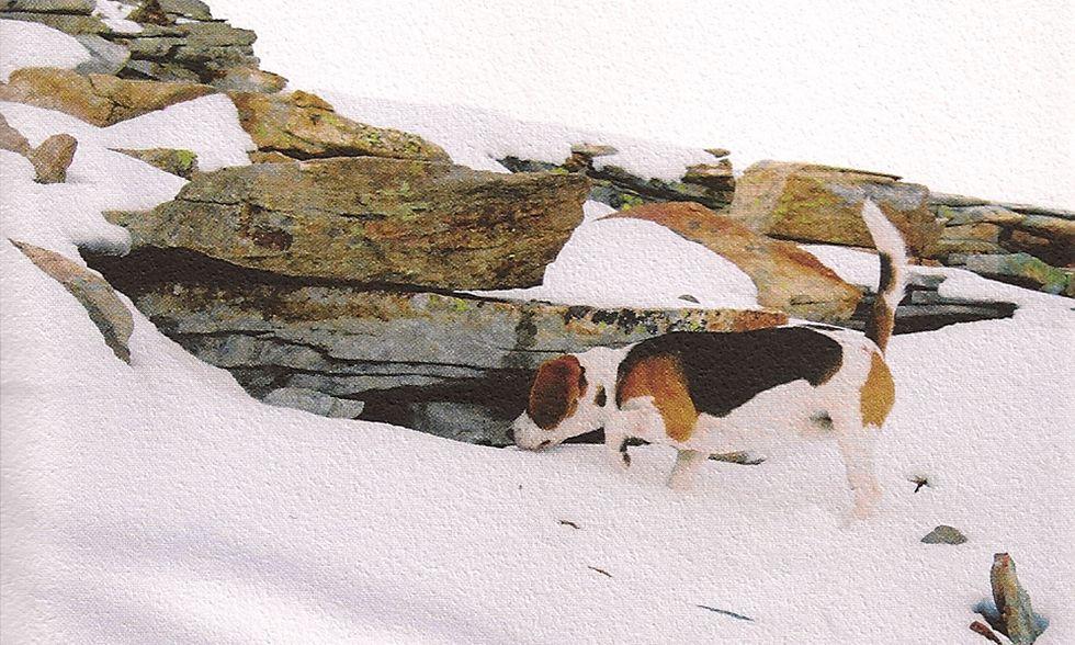 Claudio Morandini, 'Neve, cane, piede' - La recensione