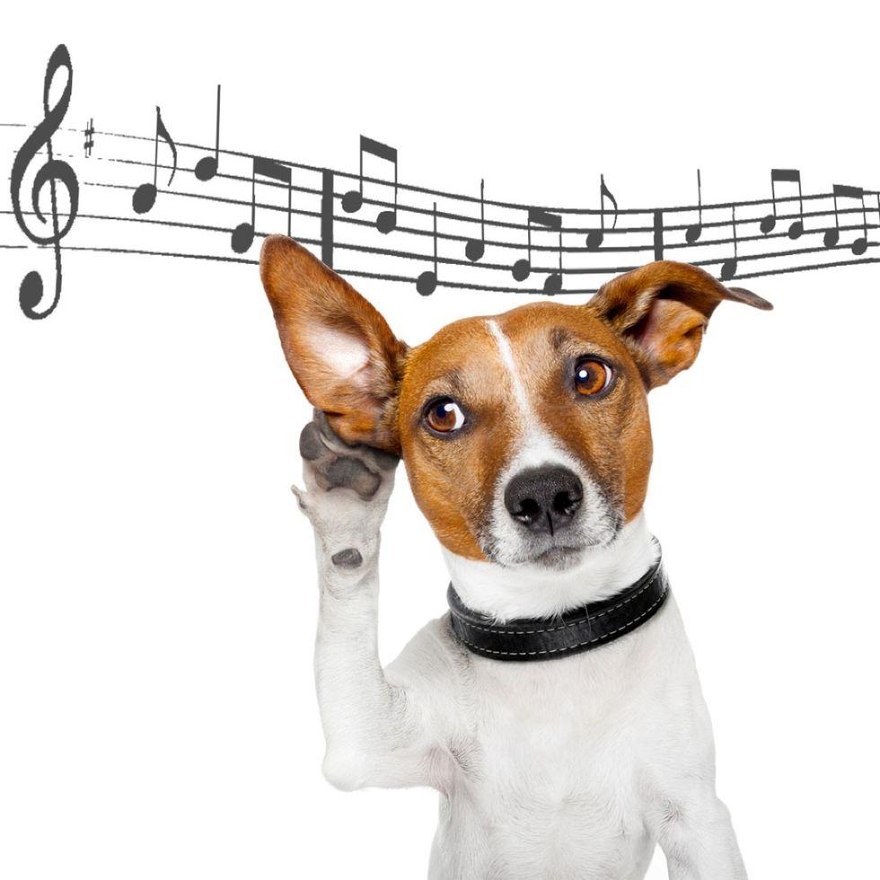 Roero Music Fest, l'appuntamento con la musica che ama gli animali