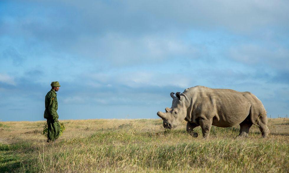 Rinoceronti in Kenya