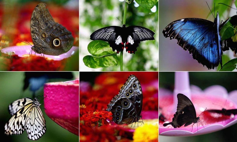 Dubai, Giardino delle Farfalle