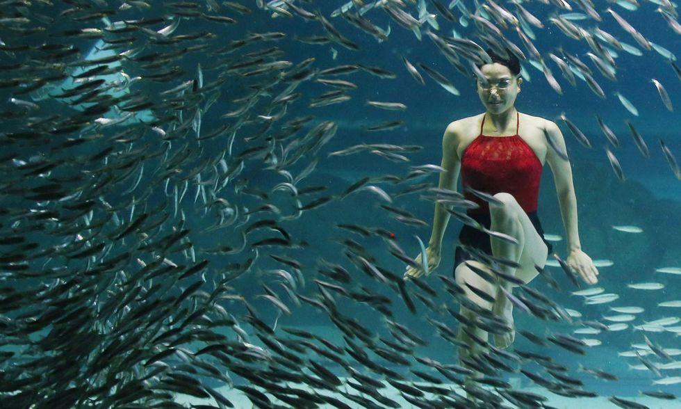 Nuoto sincronizzato tra le sardine a Seul