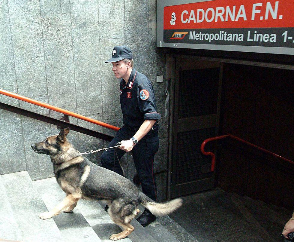 Droga, tabacco, denaro, esplosivi: ecco i cani delle forze dell'ordine