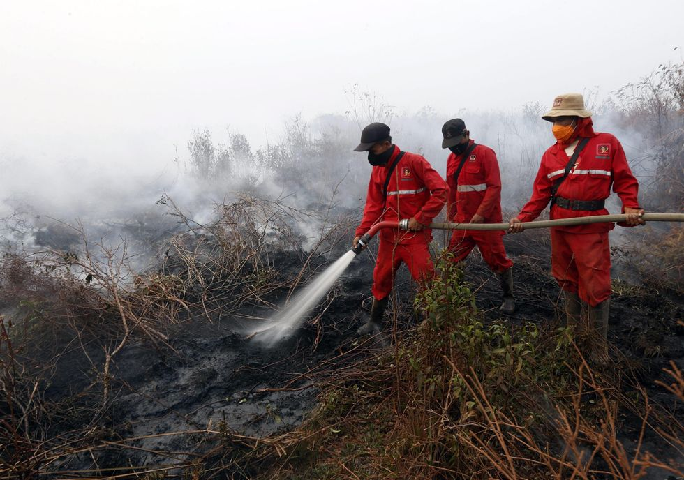 Roghi nelle foreste: emergenza ambientale in Indonesia