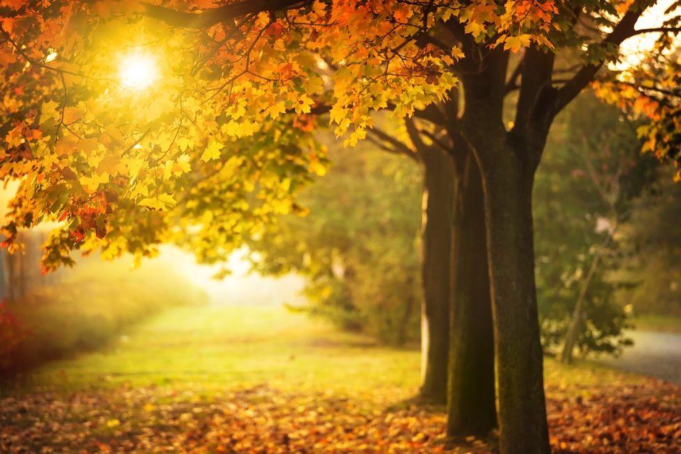 Cinque buoni motivi per amare l'autunno