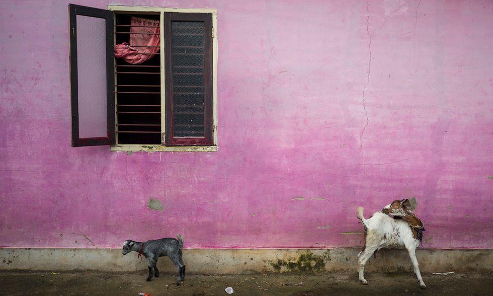 Alex Webb, Fotografie dall'India