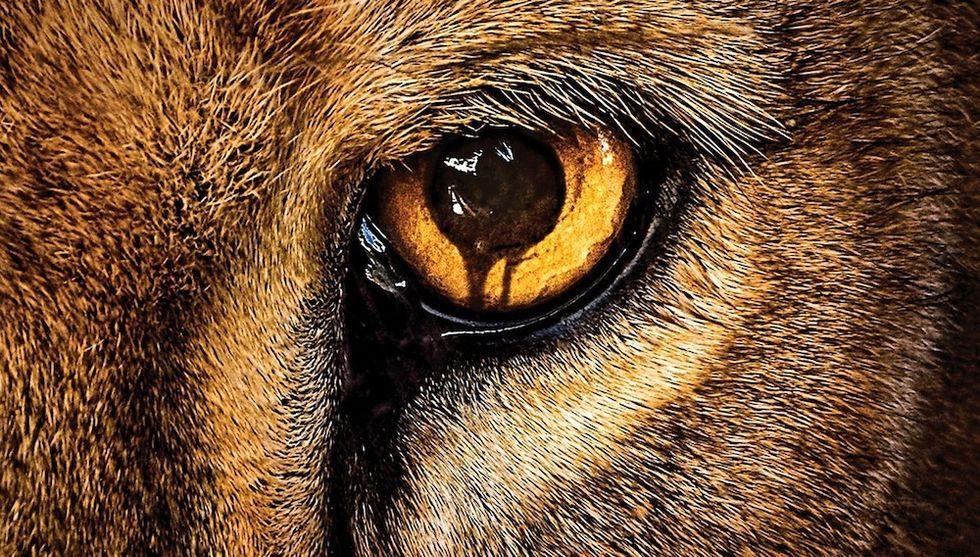 Zoo: quando gli animali si ribellano. 6 cose da sapere e trailer
