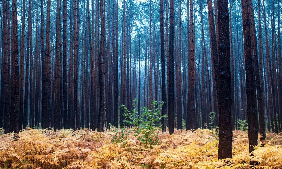 Un piovoso mattino d'autunno in pineta