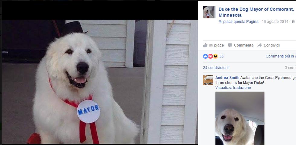 Duke, il cane-sindaco (per la terza volta)