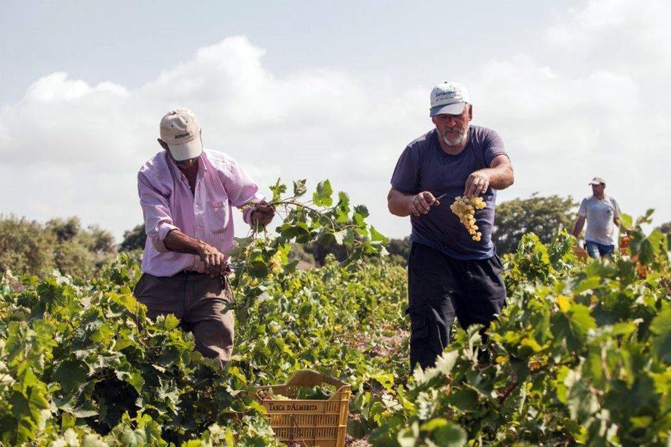 Nuova legge sul vino: ecco perché da oggi sarà più facile produrre e vendere