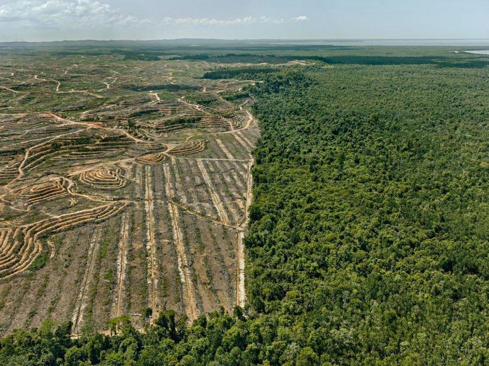 Clearcut #1 Palm Oil PlantatBorneo Malaysia 2016_WEB