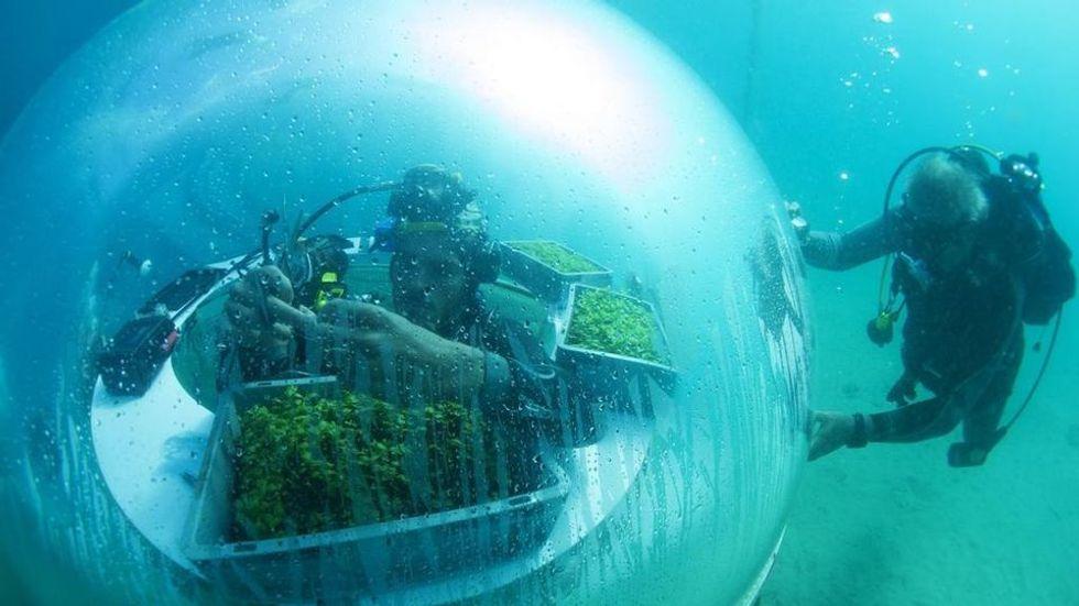 Qui il basilico cresce sotto il mare
