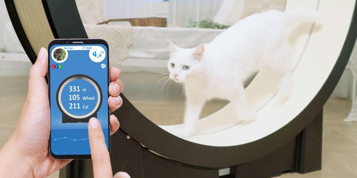 Tecnologia: sei gadget immancabili per il tuo animale
