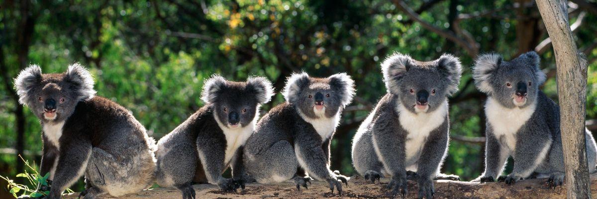 Viaggiare in Australia guardando le sue serie tv