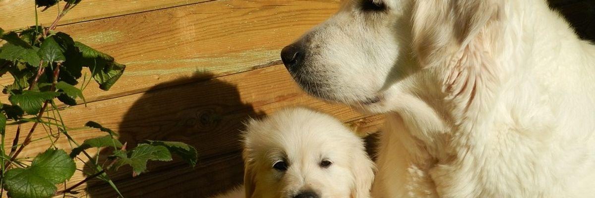 Leishmaniosi nel cane in costante aumento anche nelle regioni del Nord Italia