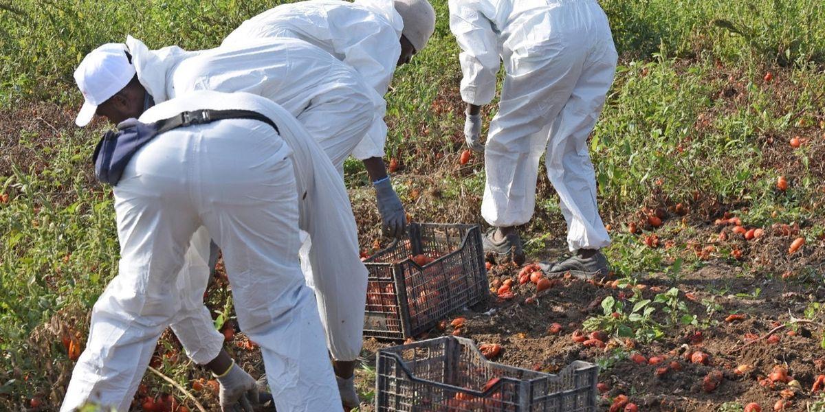Il governo litiga sul permesso temporaneo di sei mesi e i pomodori a novembre