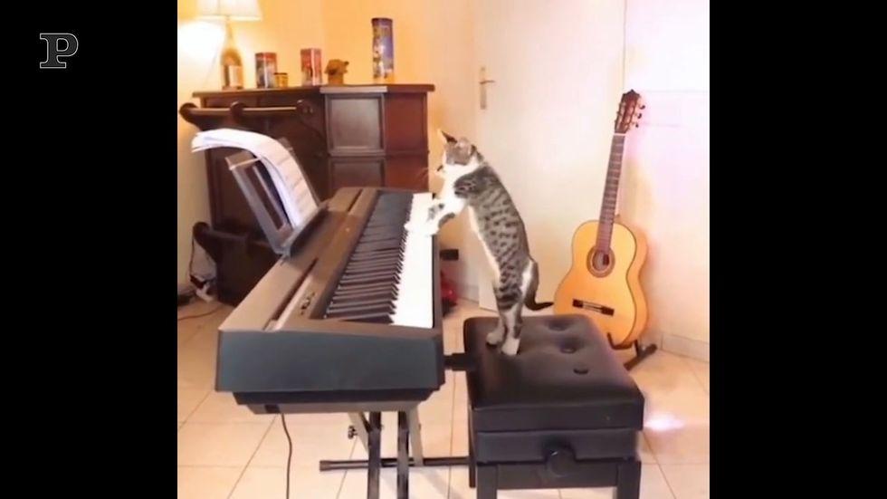 Quando il tuo gatto è anche un pianista