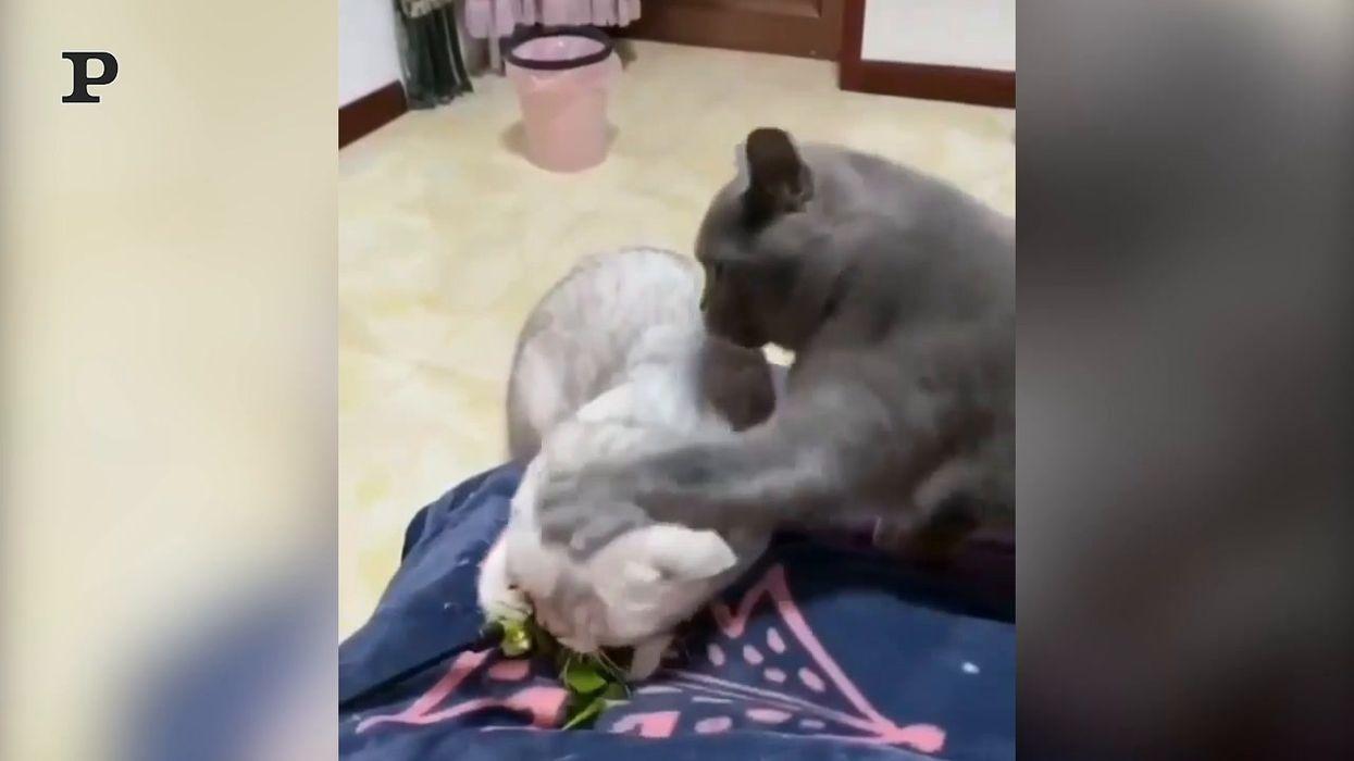 Questi gatti non vanno molto d