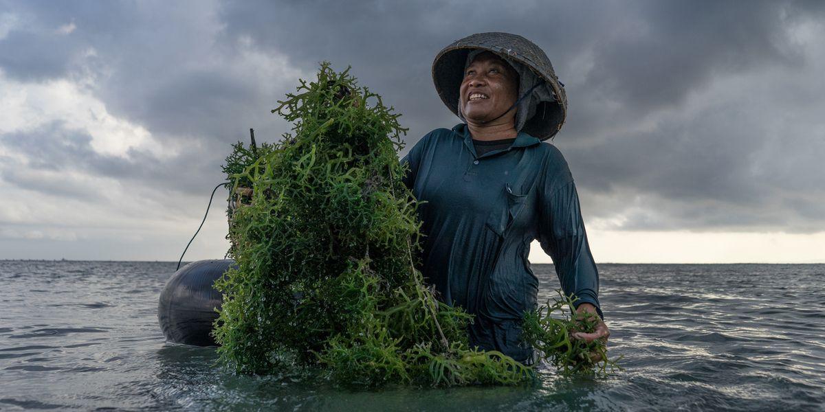 Il tempo delle alghe