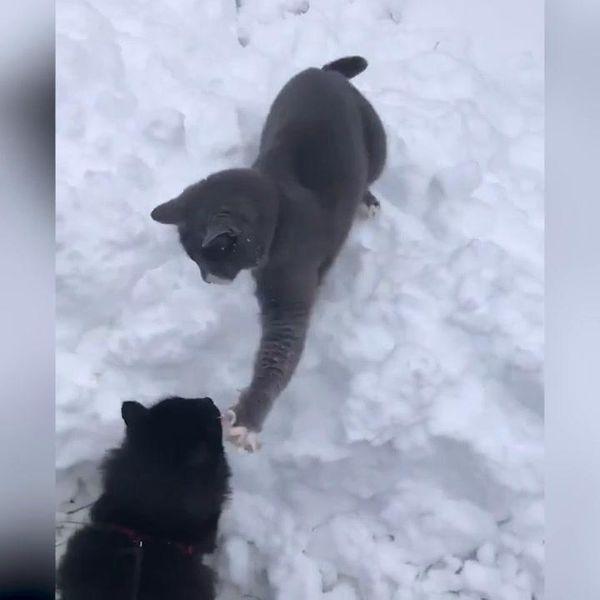 ?Cade la neve e volano sberle tra gatti | video