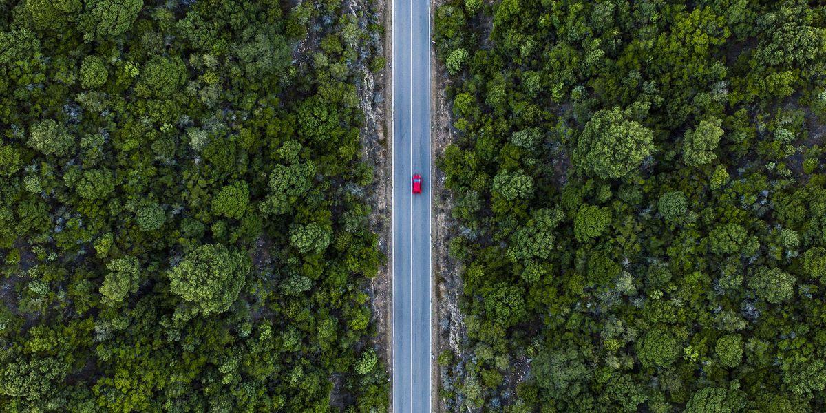 alberi bosco