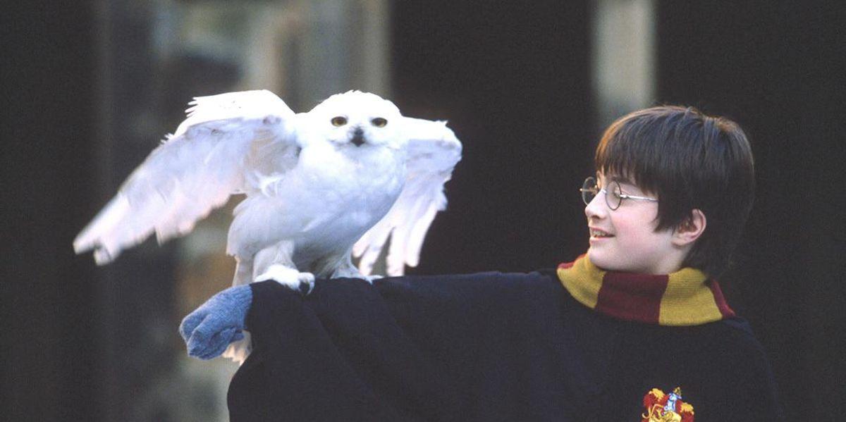 La magia di Harry Potter. Da storia per ragazzi a business da 25 miliardi