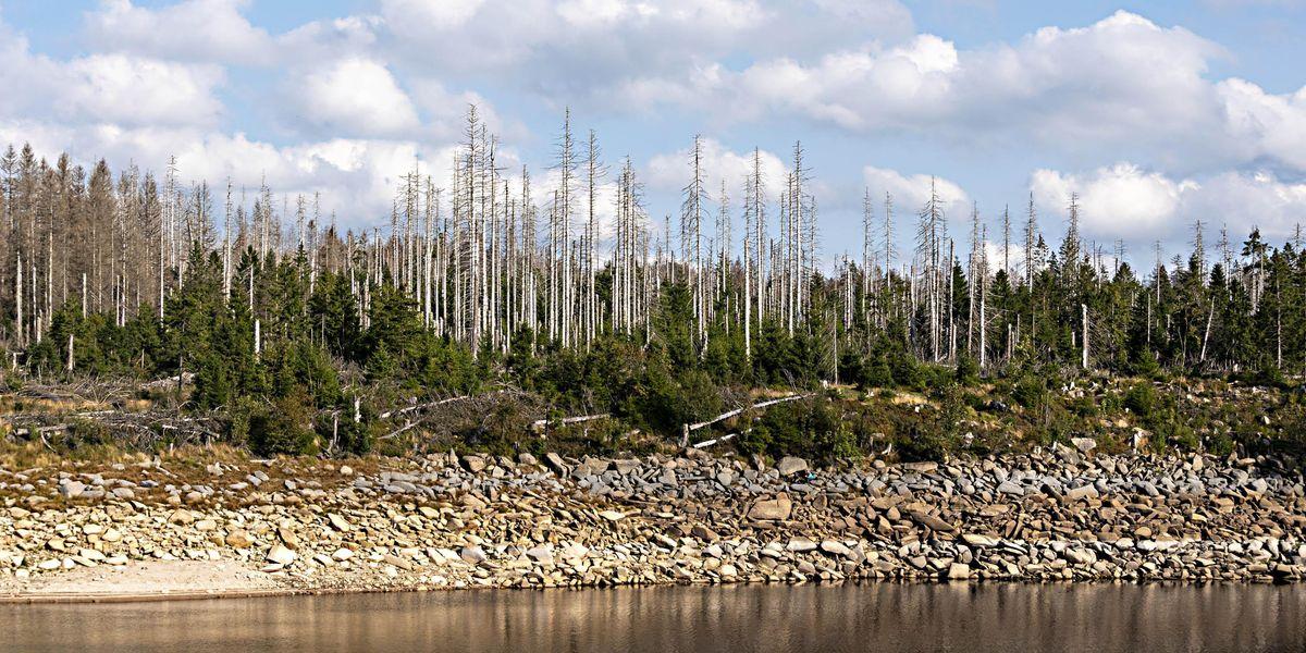 lago Oderteich