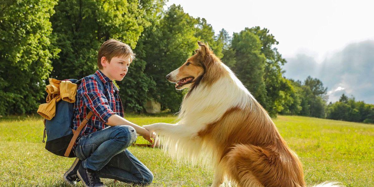 Lassie film