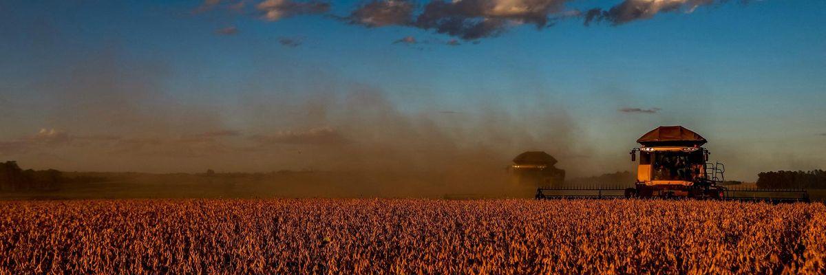 coltivazione di soia
