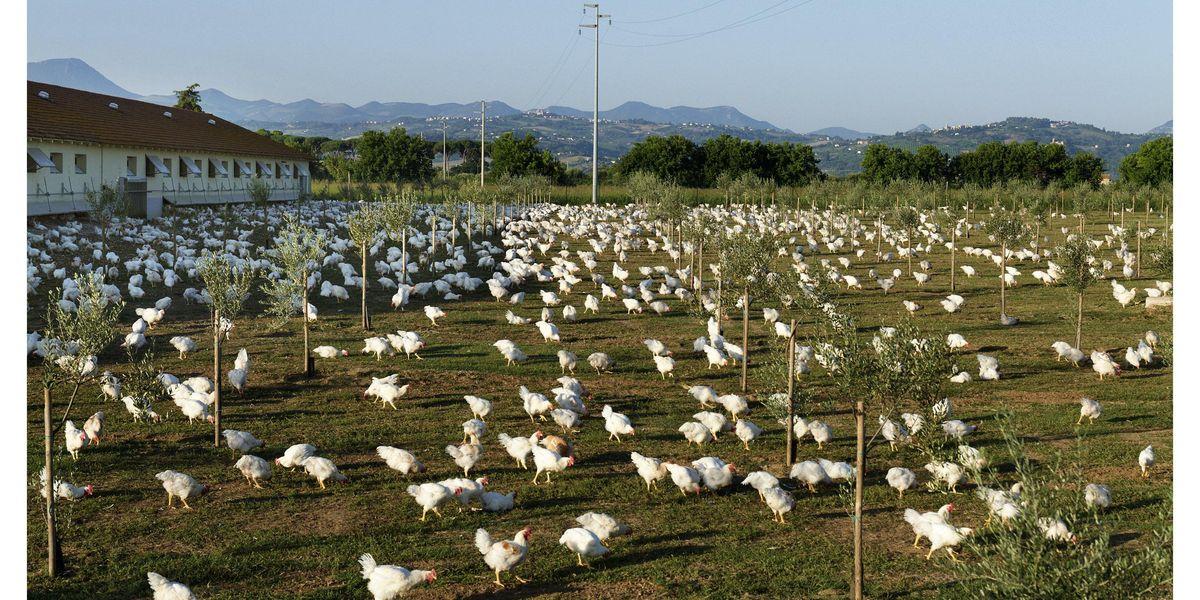 Non solo profitto ma anche pianeta e benessere delle persone e degli animali. La visione di Fileni