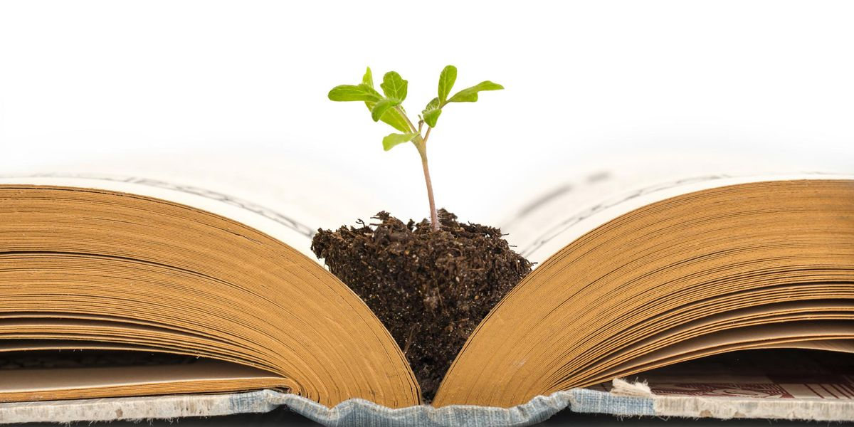 libro green premio letterario