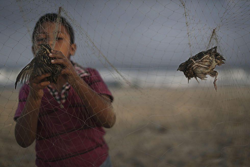 Caccia alla quaglia nella Striscia di Gaza