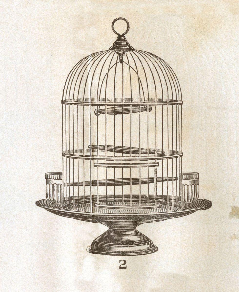 Le forbici e la gabbia: la pagina più sconcia di Proust