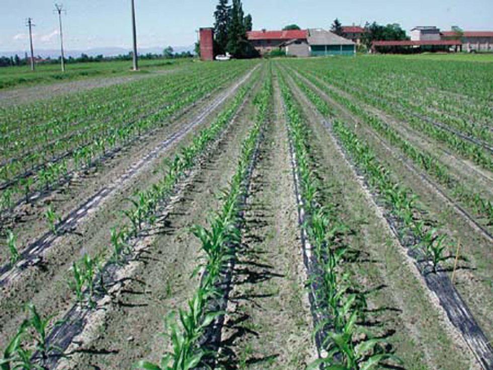 Imu, terreni agricoli: ecco perché i contadini tremano