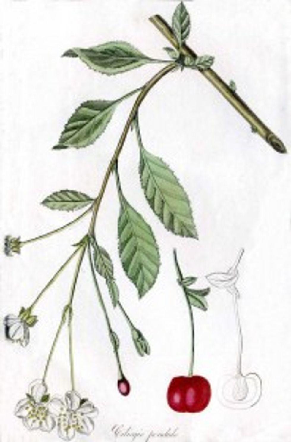 Il nettare speciale della Botanica parallela