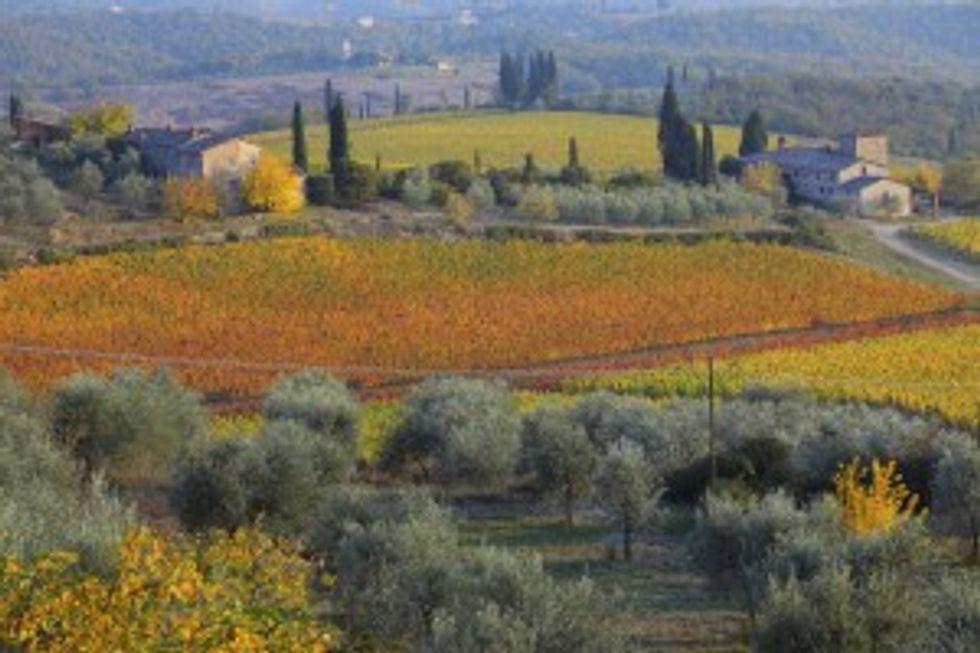 Uve francesi di Toscana