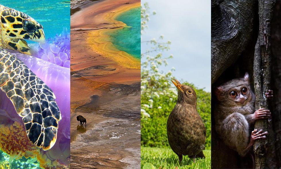 Meraviglie della natura: le foto premiate dalla Society of Biology
