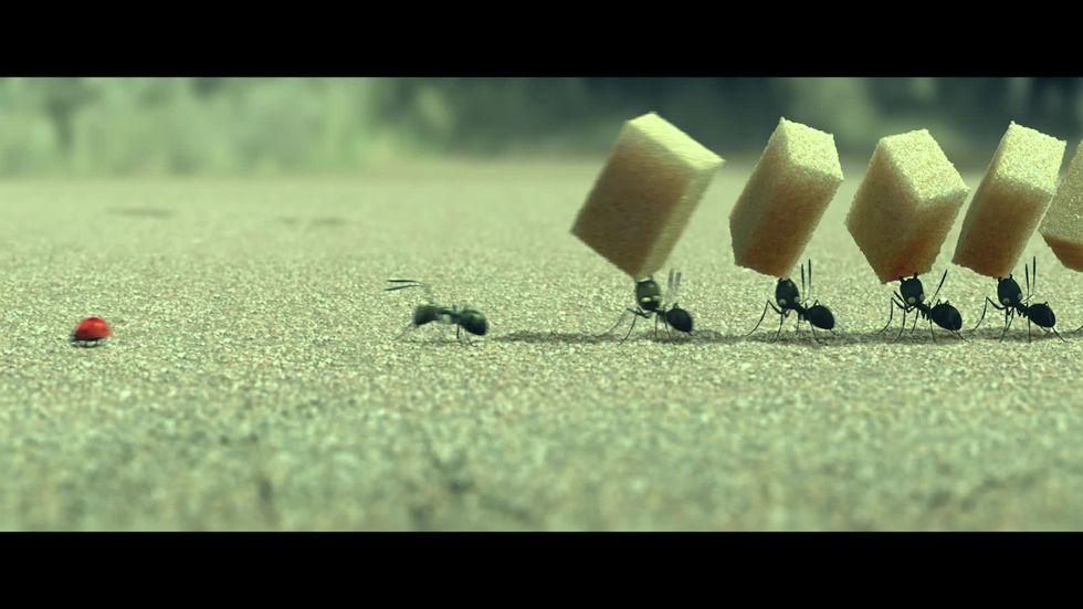 Minuscule - La valle delle formiche perdute, un estratto del film
