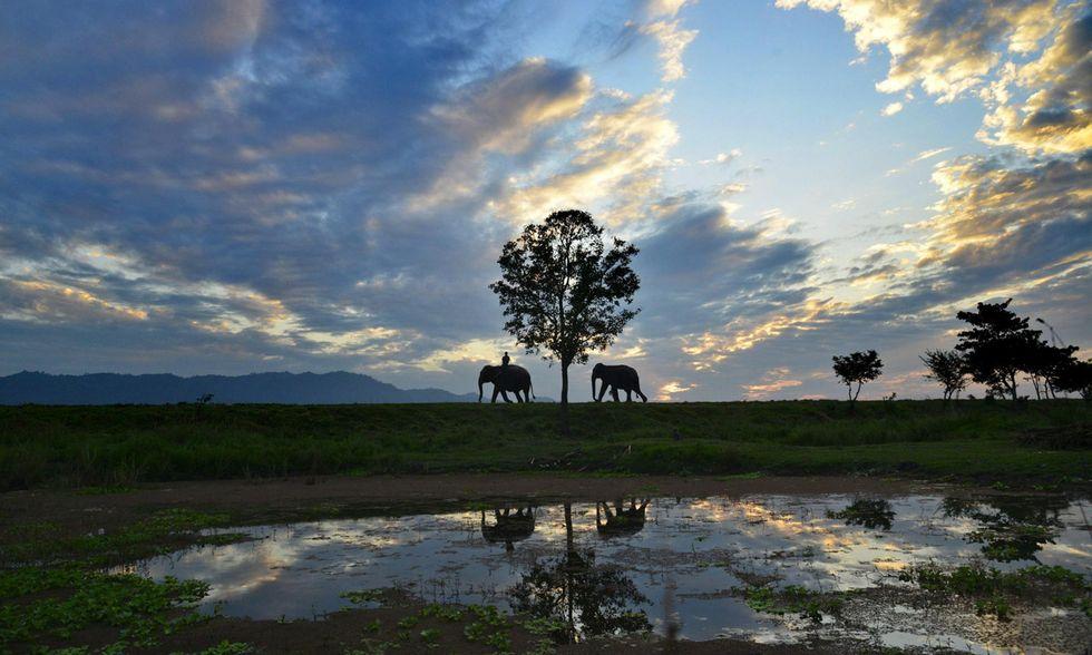 Kaziranga National Park, India