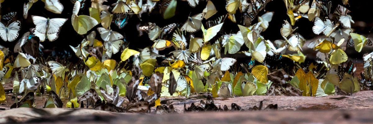 Farfalle, la piccola bellezza